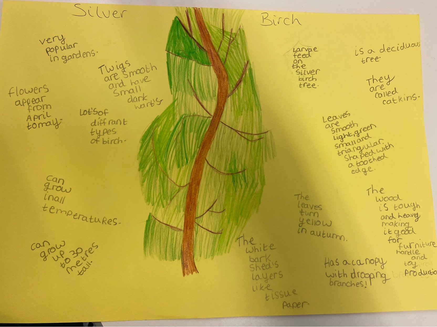 Learning all about our class Tree Friend.