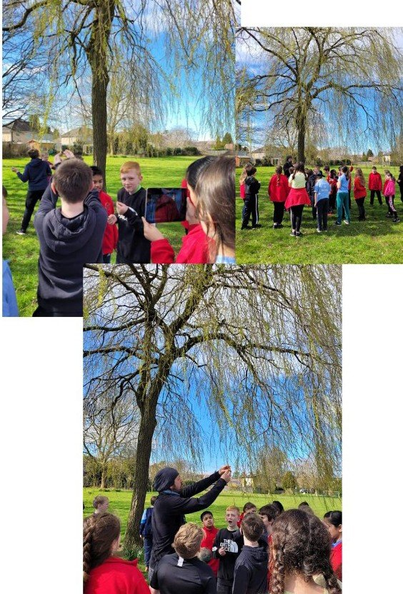 Year 6 getting started on the tree trail