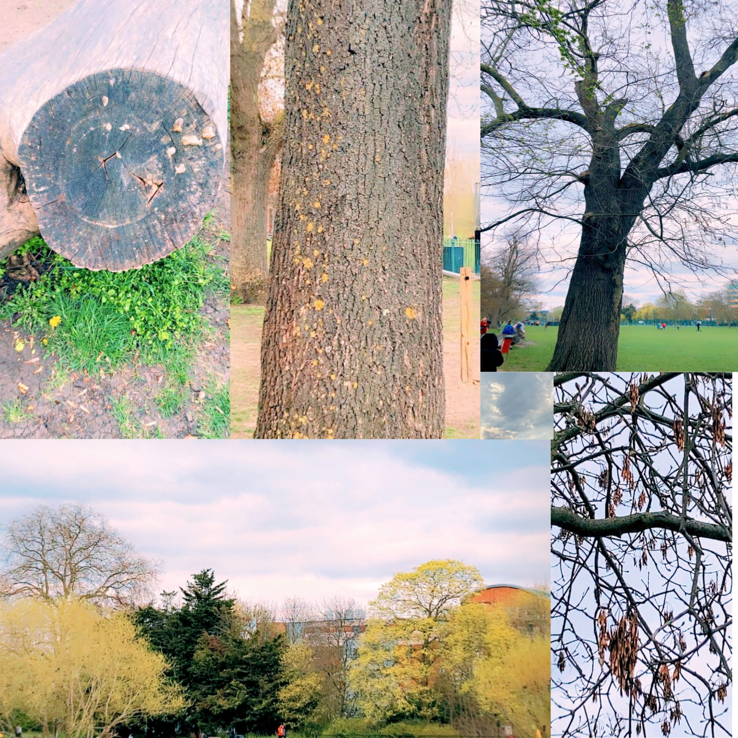 Photographing local trees