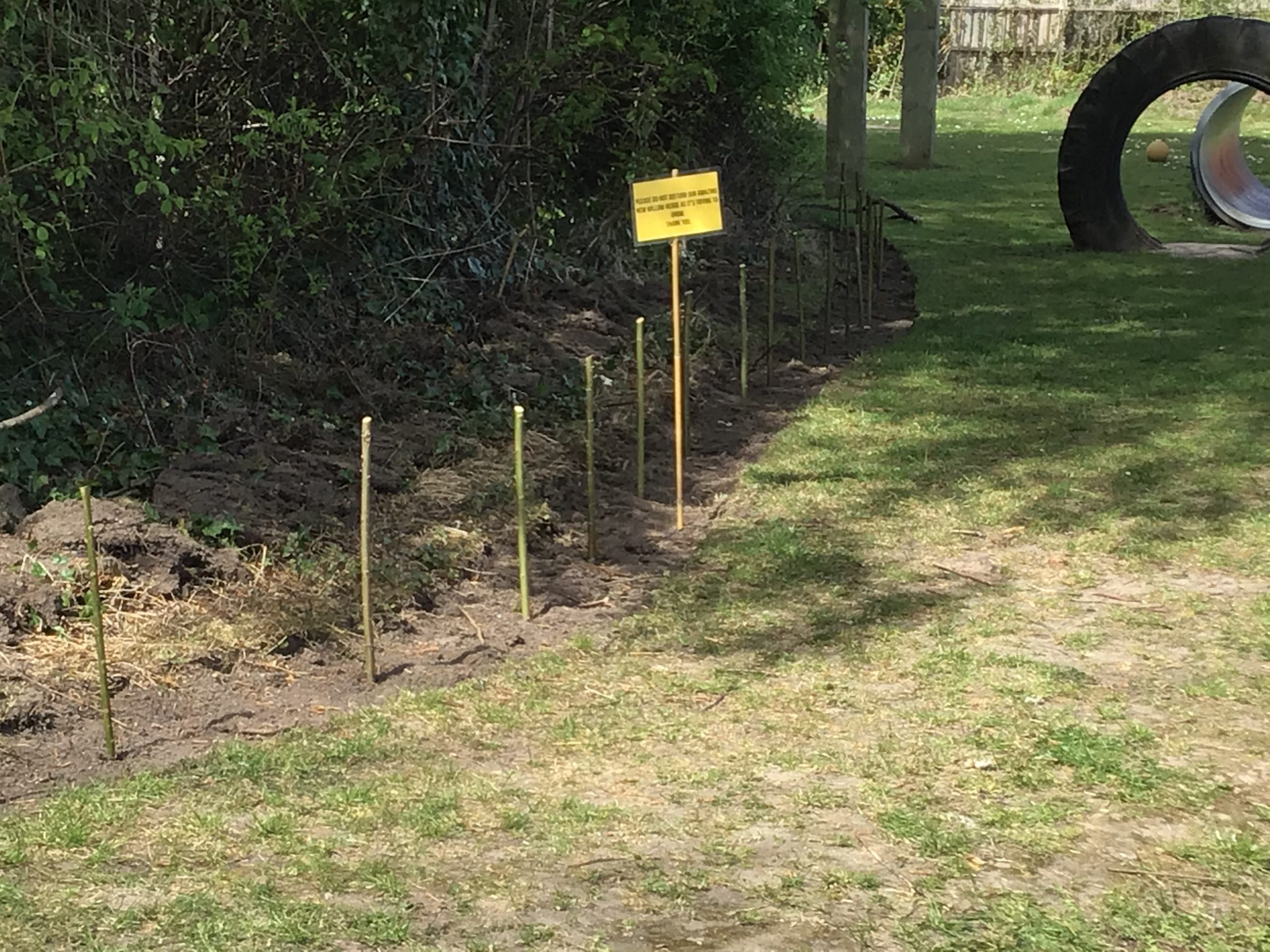 New willow hedge