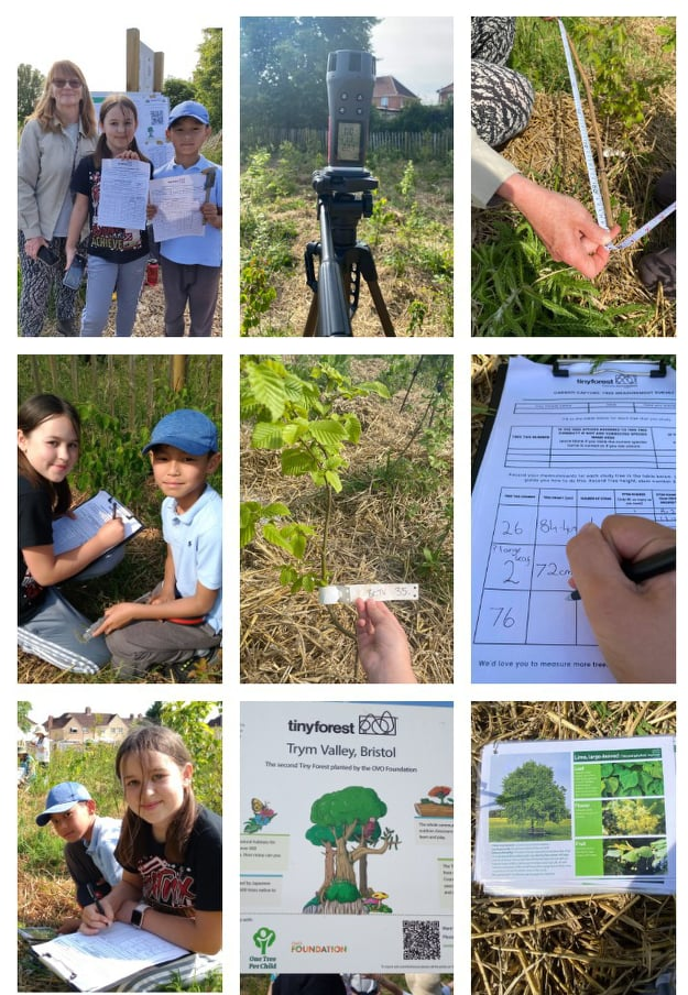 Citizen Science in a Tiny Forest