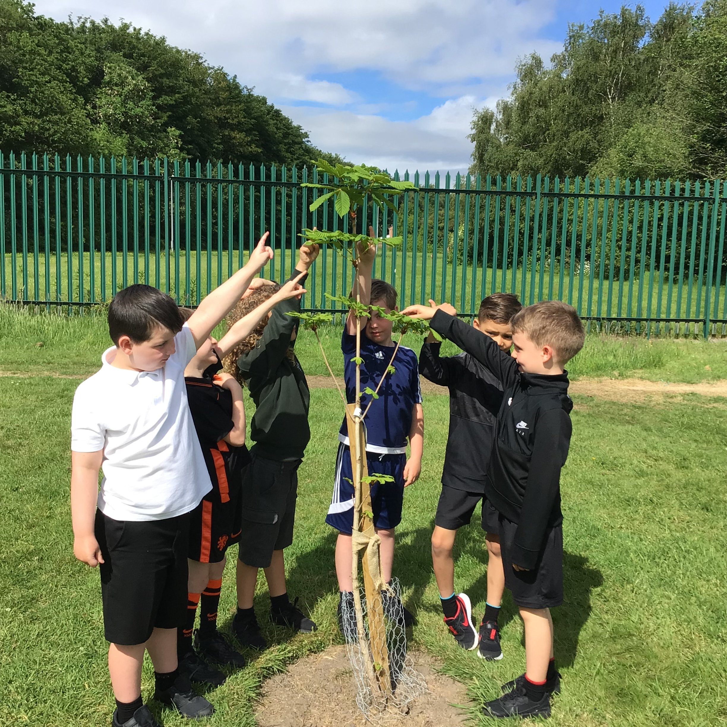 How our trees have grown!