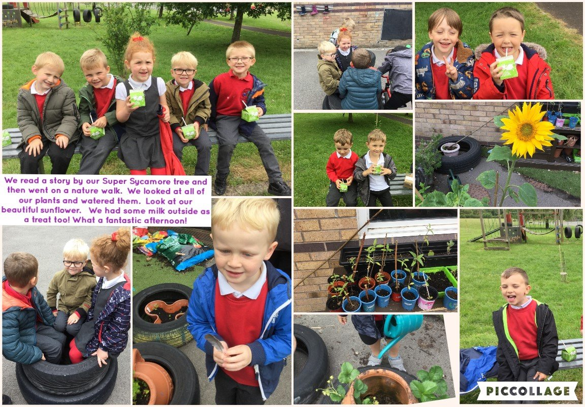 Reception have been busy this week. Growing sunflowers and sycamores!
