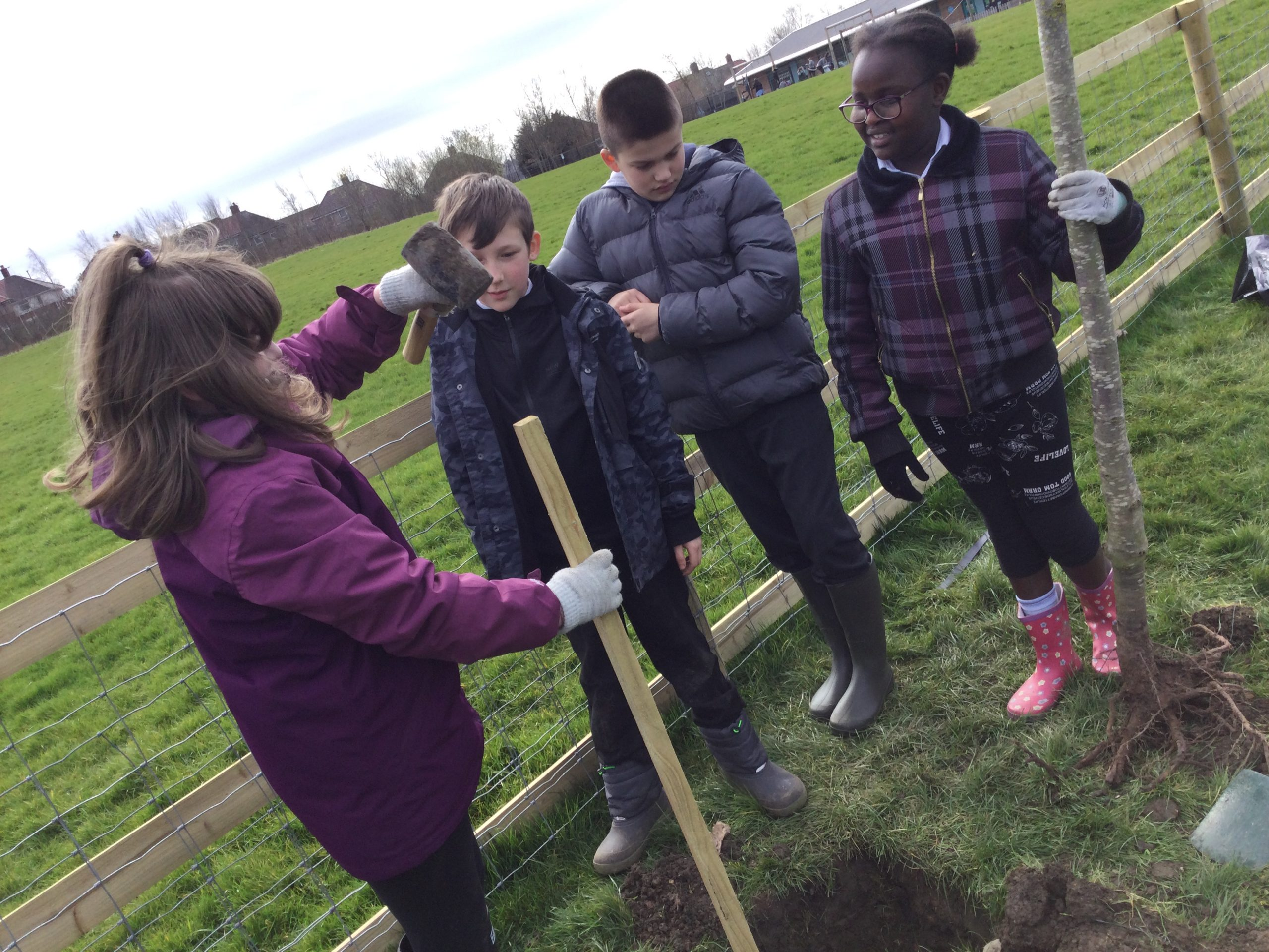 Planting the Arbourthorne Positivitrees