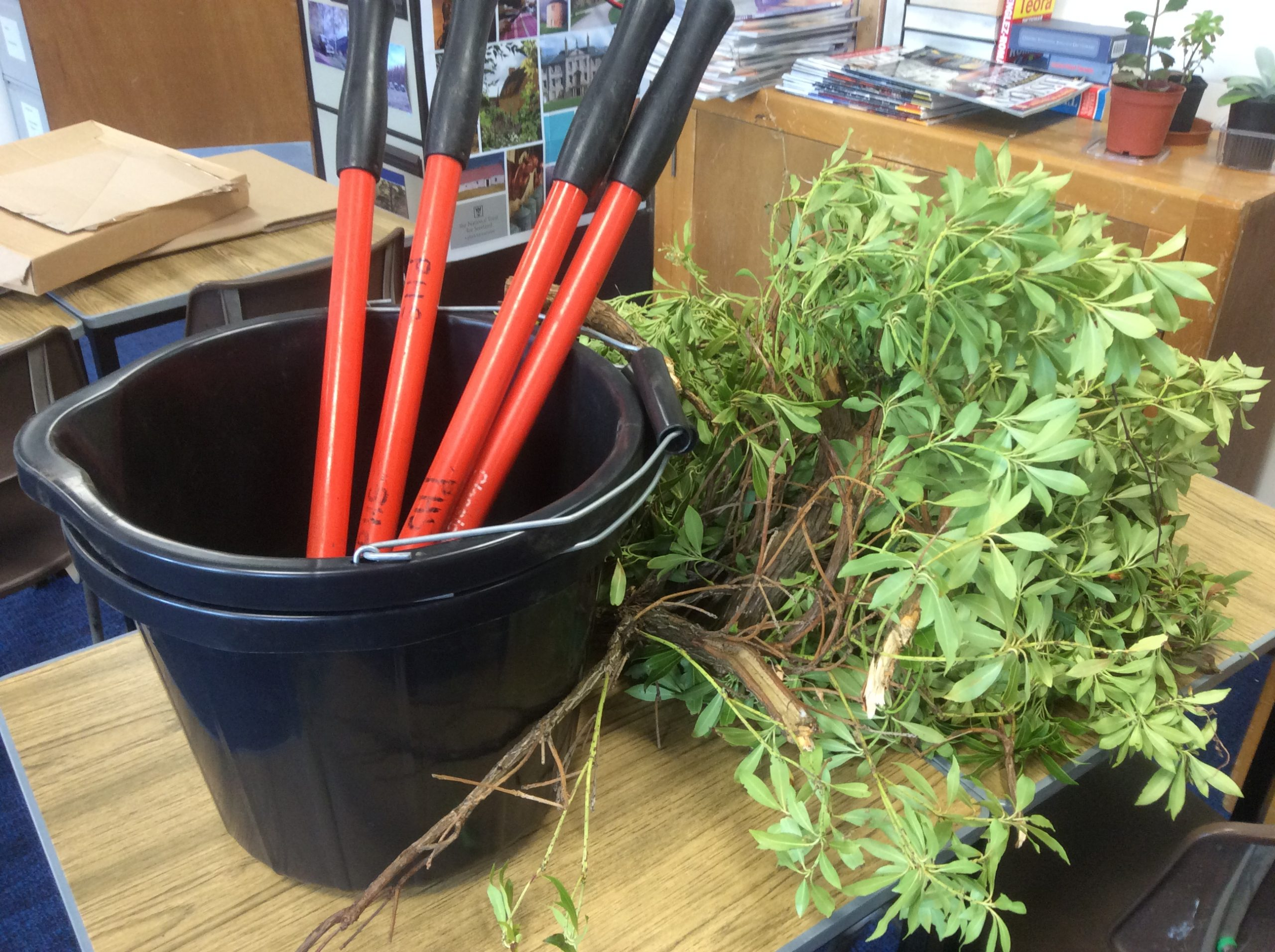 Creating minibeast habitat
