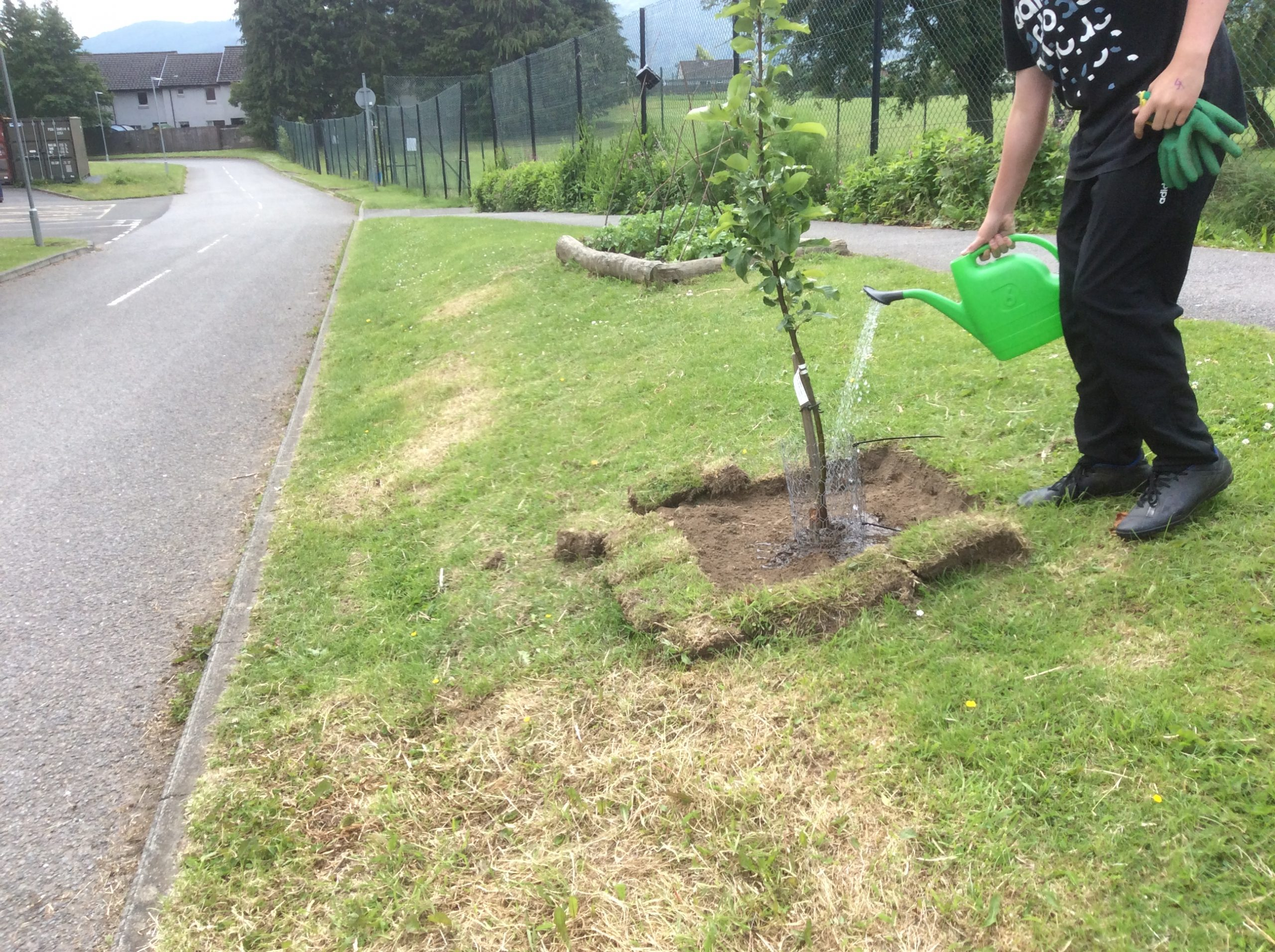 Reinforcing tree guards