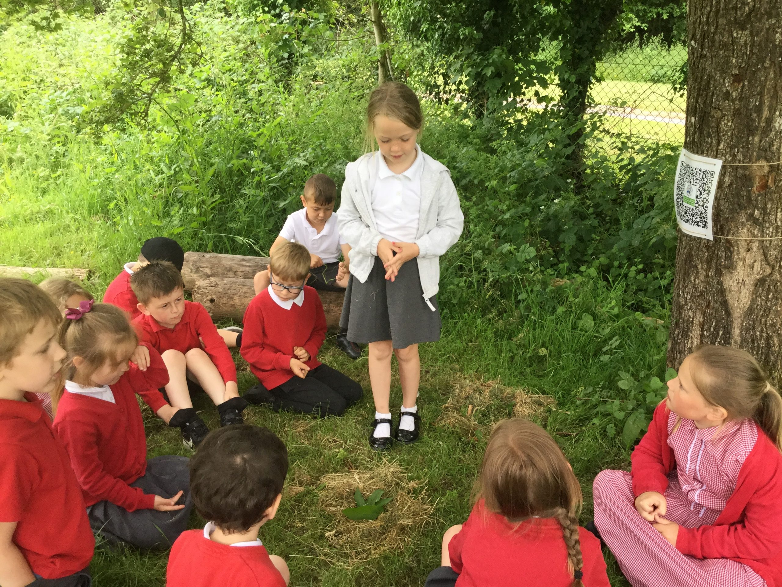 Nest Building and Tree Inspection