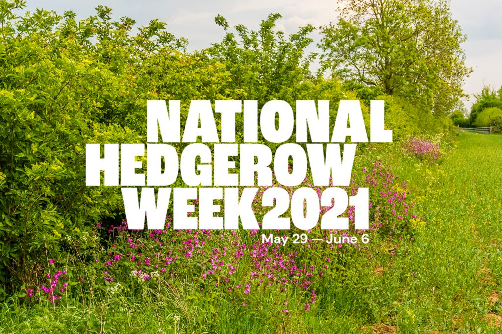 Be a Force For Nature and get involved with National Hedgerow Week!