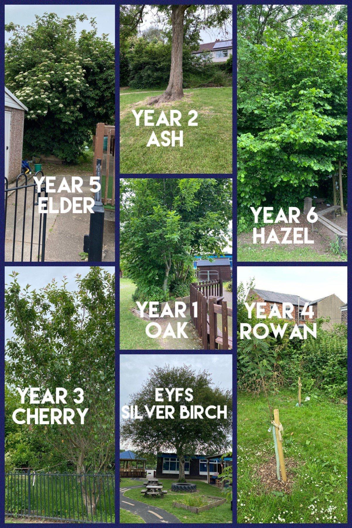 Talking Tree Trail Plan