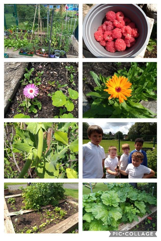 Gardening success
