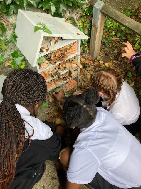 The Year 6 Bug Hotel is open for business