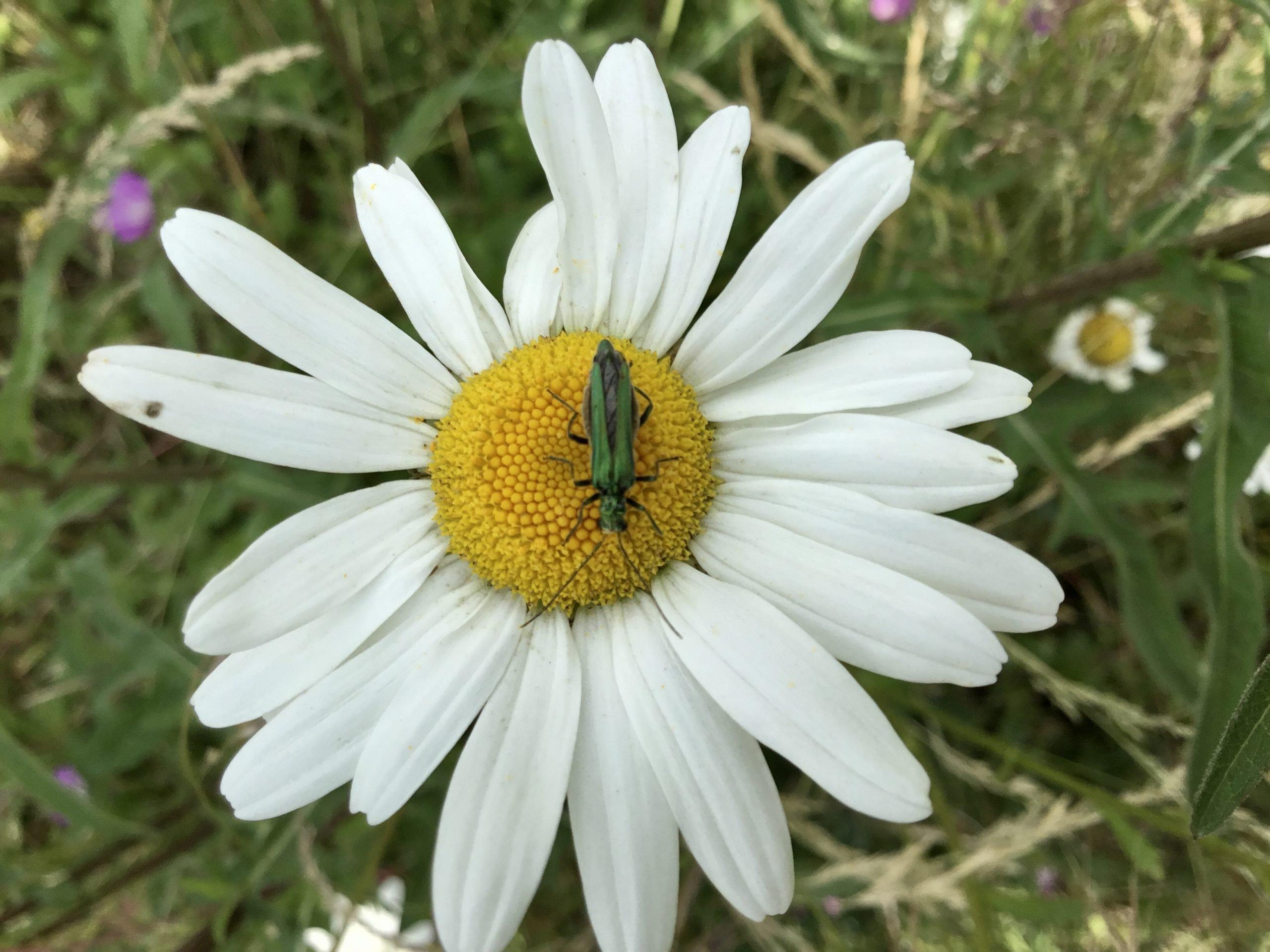Make It Better For Beetles