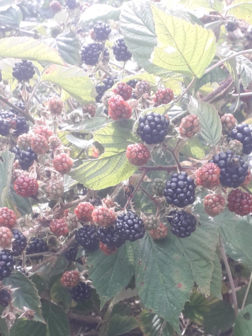 Hedgerows are amazing places