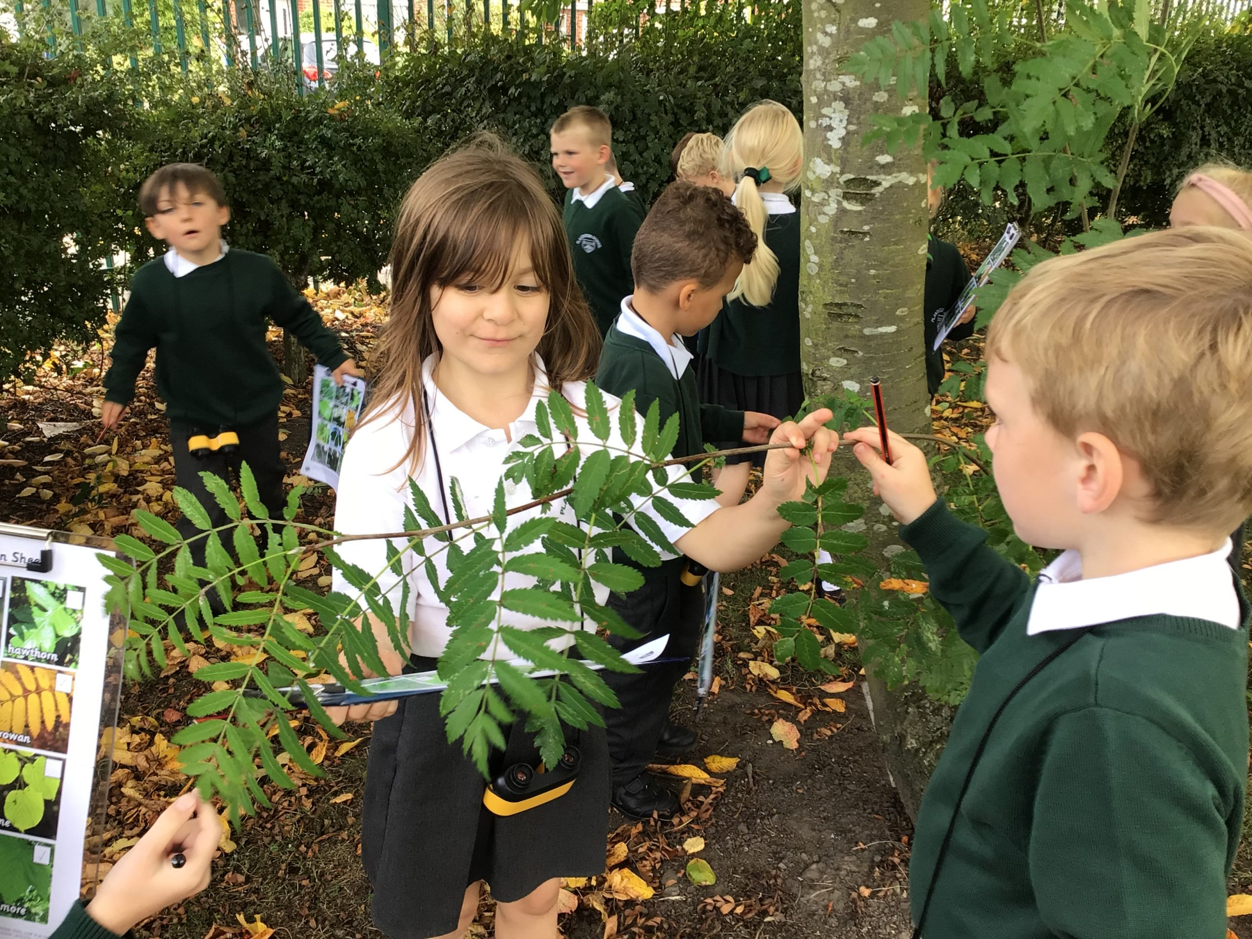 Y2 Tree Trail, identifying all our trees.