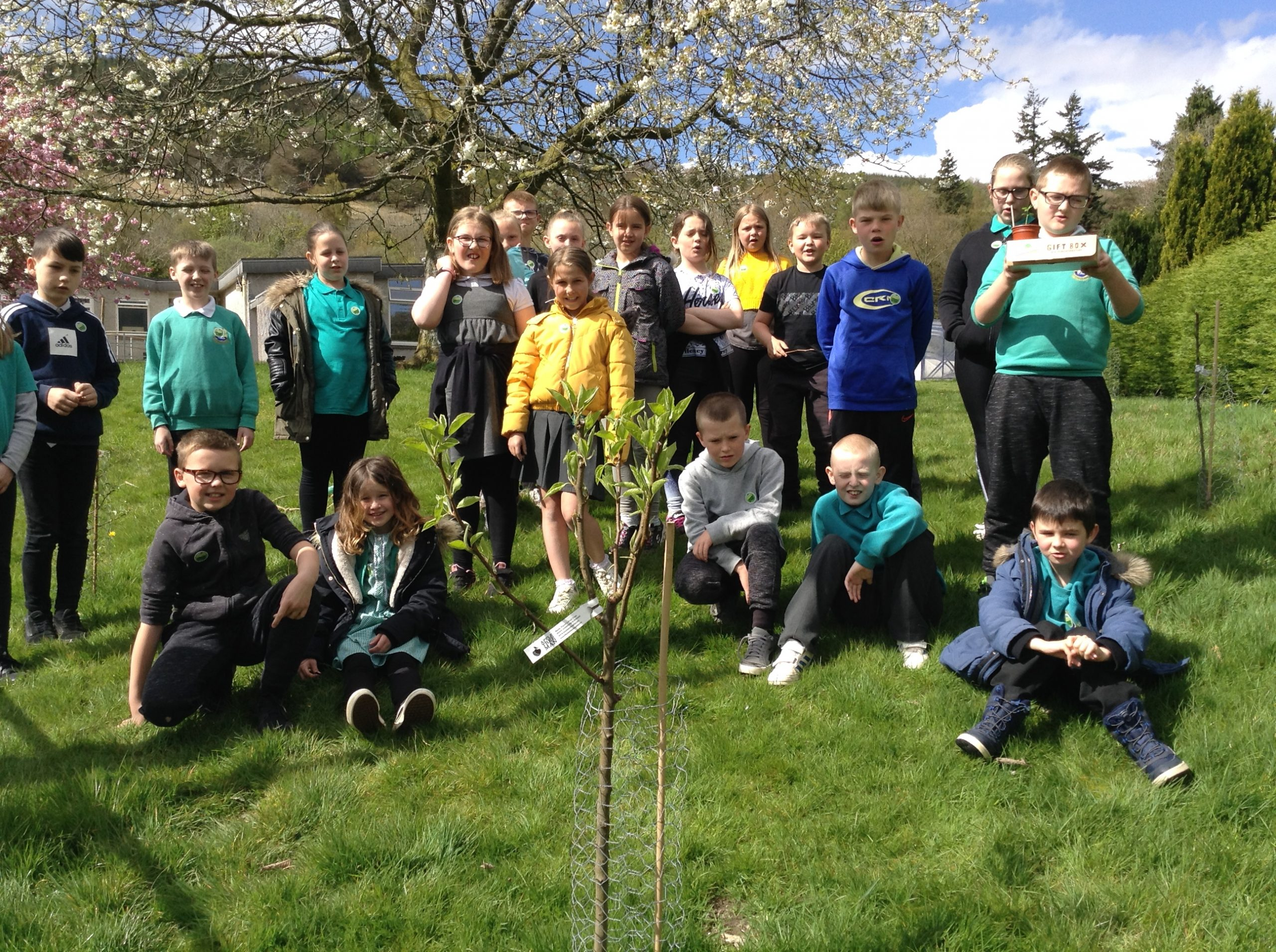 Rosneath Young Tree Champions